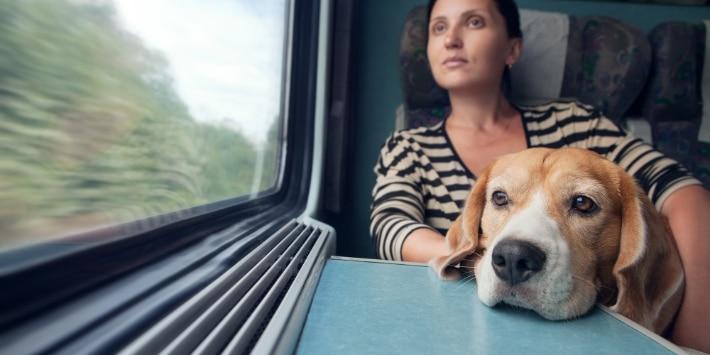 Woman with dog travel in railway wagon