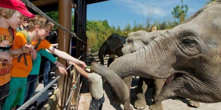 Kinder füttern Elefanten