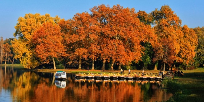 Herbst im Park Wörlitz
