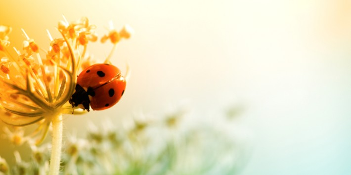 Ladybug sitting on top of wildflower