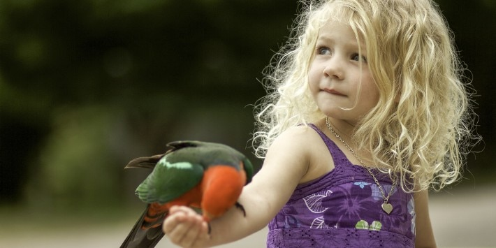 Cute little girl with a parrot on her arm.