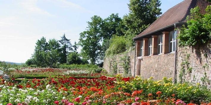 Rosenbeete im Schloßpark, Marburg