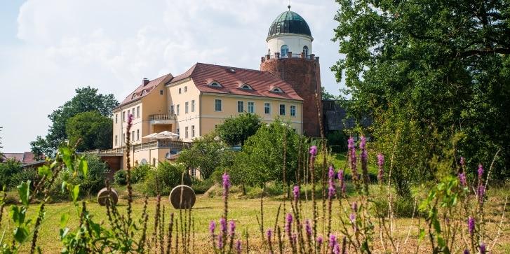 Elbe Blumenwiese