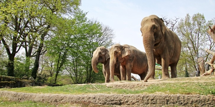 Elefanten Zoo Karlsruhe