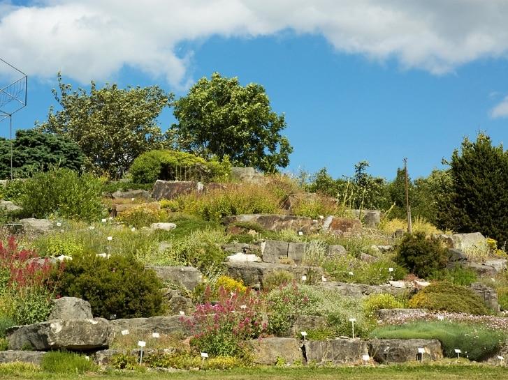 Botanischer Garten Kiel, Alpinum