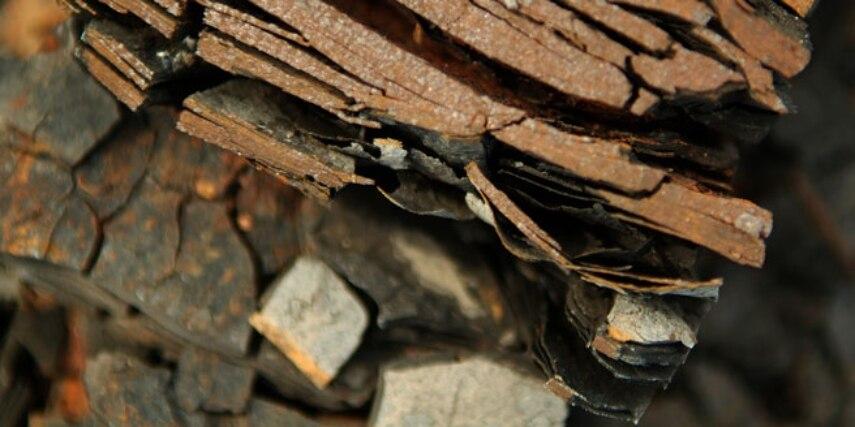 Gestein aus der Grube Messel