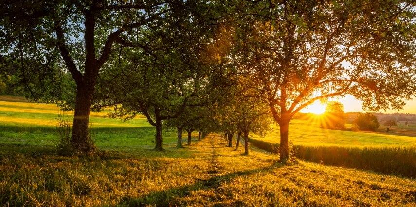 Bäume, Bliesgau Landschaft