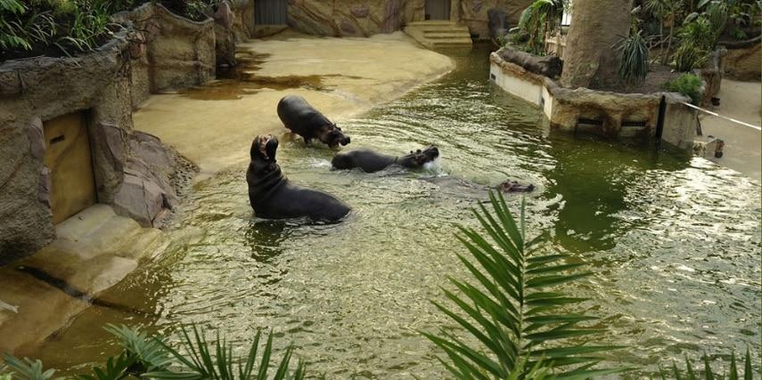 Nilpferdanlage im Kölner Zoo