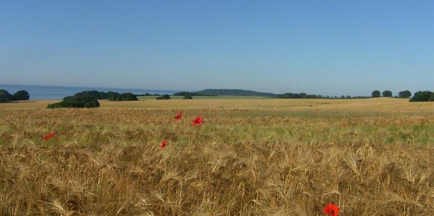 Feld bei Stresow