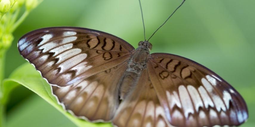 Schmetterling im Zoo Krefeld