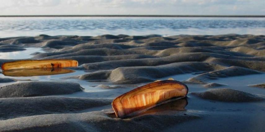 Muscheln im Gegenlicht