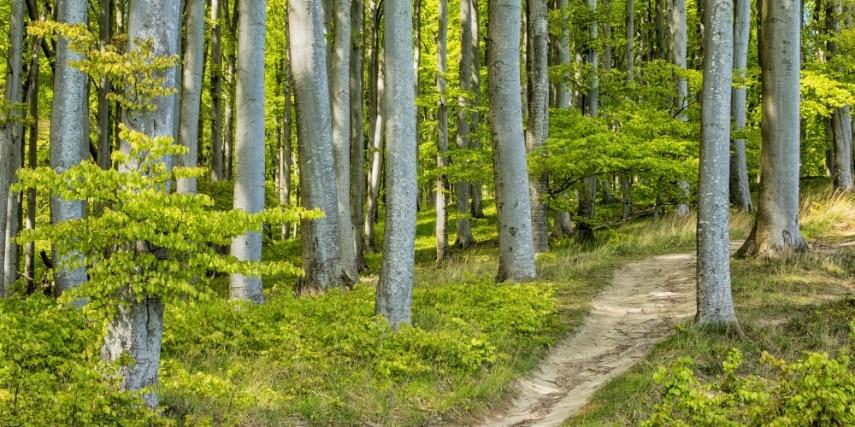 Buchenwald im Nationalpark Jasmund