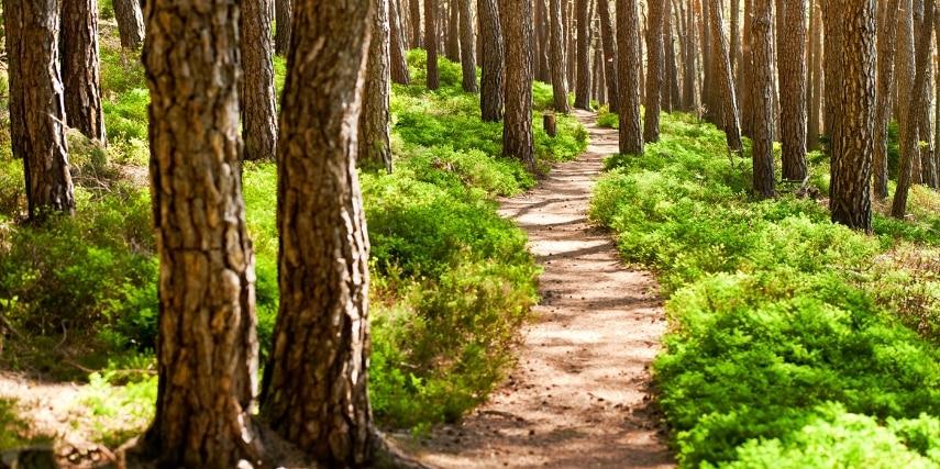 Waldweg im Pfälzerwald