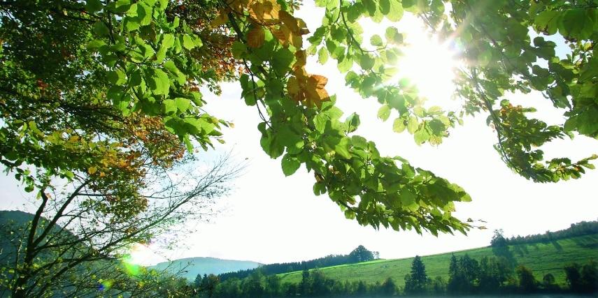 Naturpark Diemelsee Willingen