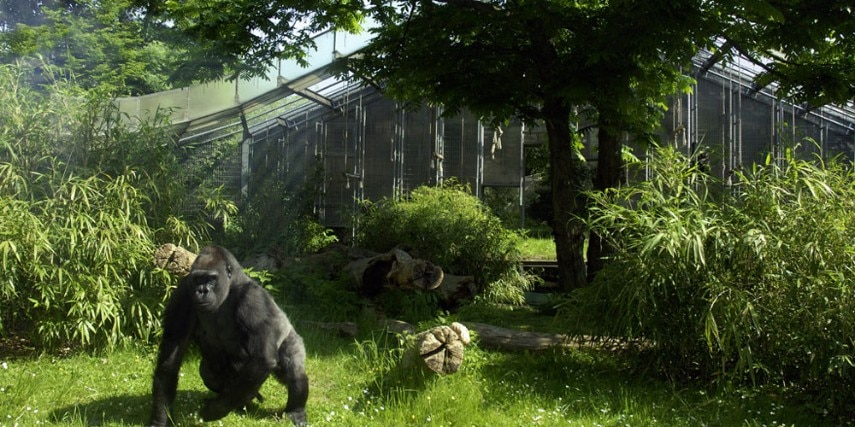 Gorillaanlage im Kölner Zoo