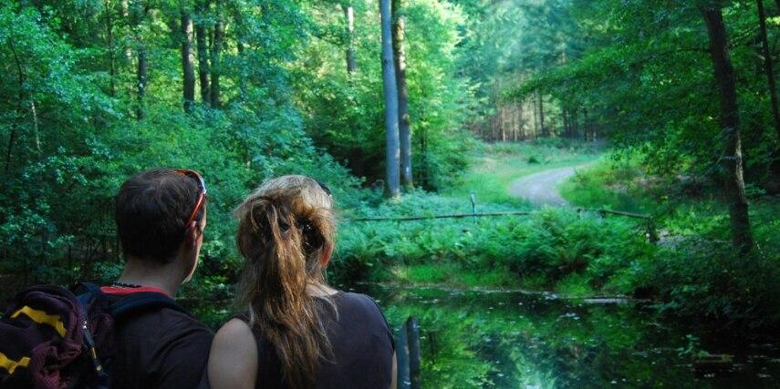 Spiegelteich am Burgwaldpfad