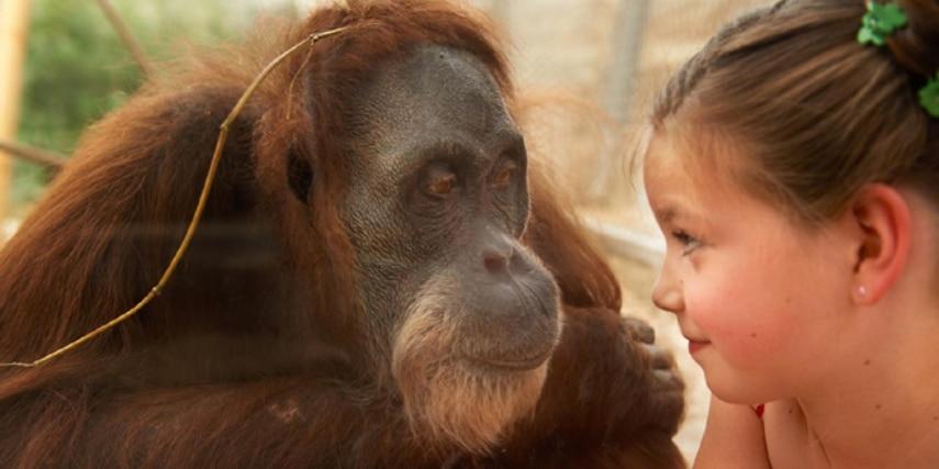 Schimpanse und Mädchen