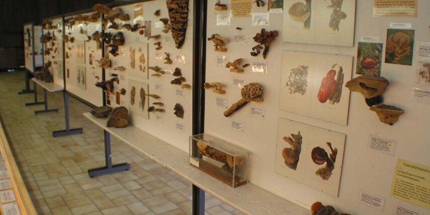 Schautafeln im Pilzkundemuseum, Bad Laasphe