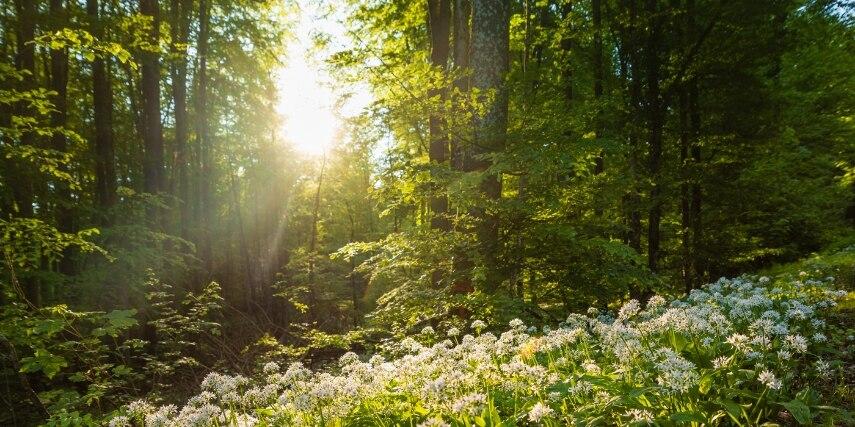 Bliesgau, Wald, Blumenwiese