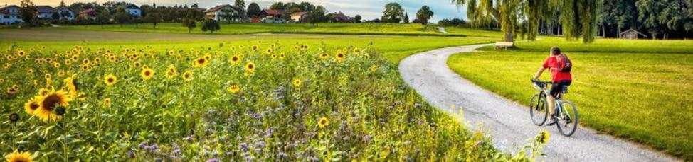 Radfahrer am Sonnenblumenfeld