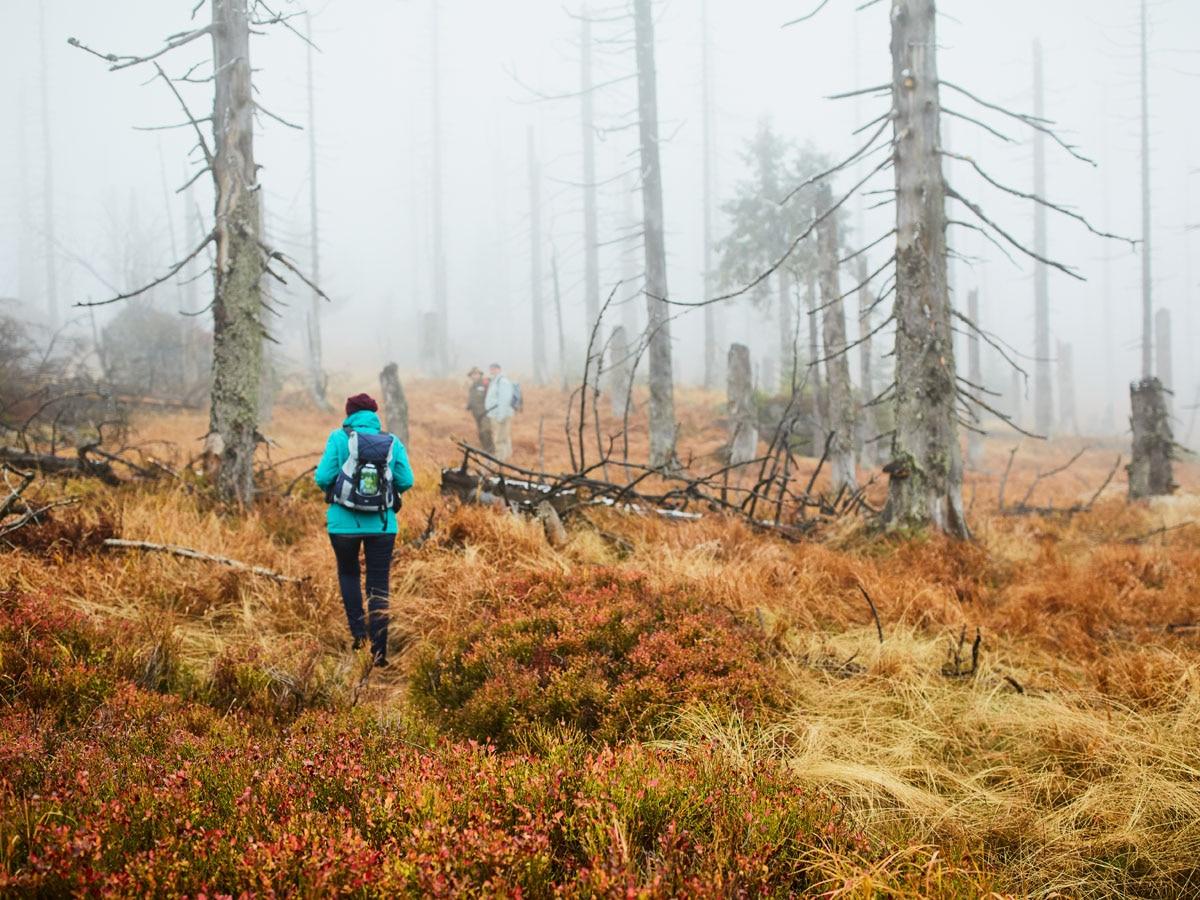 Wanderer im Nationalpark Bayerischer Wald