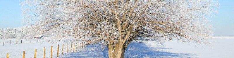 Baum im Winter bei Schnee